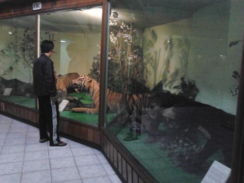 Beberapa Koleksi Satwa Yang sudah di Awetkan, 'Tampak Harimau Sumatra dan Beruang'
