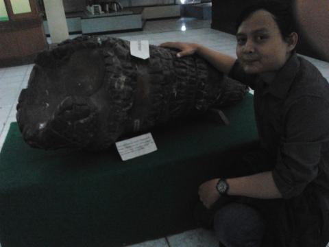 Batu Siput (Fosil Kayu Terkesikan)